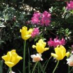 3/19/2011 Dallas Blooms (56)
