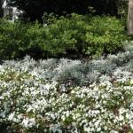 3/19/2011 Dallas Blooms (62)