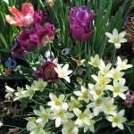 3/19/2011 Dallas Blooms (75)