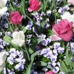 3/19/2011 Dallas Blooms (77)