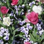 3/19/2011 Dallas Blooms (78)