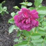3/22/2011 Spring Garden Plans (1)