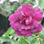 3/22/2011 Spring Garden Plans (2)