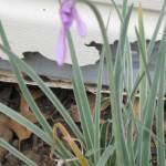 3/22/2011 Spring Garden Plans (3)