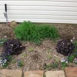 3/22/2011 Spring Garden Plans (4)