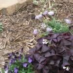 3/22/2011 Spring Garden Plans (6)