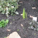 3/22/2011 Spring Garden Plans (15)