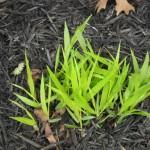 3/22/2011 Spring Garden Plans (17)