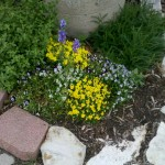 4/24/2011 Coppell Community Gardens (5)