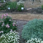 4/24/2011 Coppell Community Gardens (3)