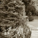 4/30/2011 Grapevine Heritage Park Botanical Gardens (2)