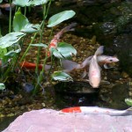 4/30/2011 Grapevine Heritage Park Botanical Gardens (10)