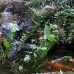4/30/2011 Grapevine Heritage Park Botanical Gardens (12)