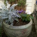 5/31/2011 Petunias, Vinca, Ornamental Pepper and Dusty Miller