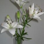 6/6/2011 Enjoying the last Navona lilies of the season