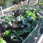 11/12/2011 Coppell Community Gardens (15)