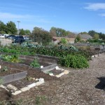 11/12/2011 Coppell Community Gardens (18)