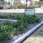 11/12/2011 AARS Test Garden (5)