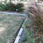 11/12/2011 AARS Test Garden (14)