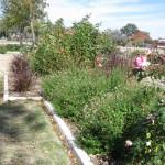 11/12/2011 AARS Test Garden (15)