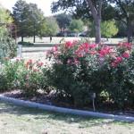11/12/2011 AARS Test Garden (24)