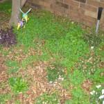 12/9/2011 Pre-winter Graveyard (14)
