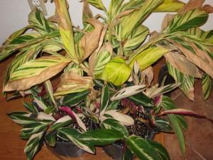 12/15/2011 Indoor Gingers