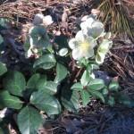 3/3/2012 Tyler Rose Gardens (1)