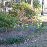 3/3/2012 Tyler Rose Gardens (3)