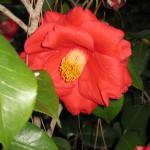 3/3/2012 Tyler Rose Gardens (4)