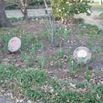 3/3/2012 Tyler Rose Gardens (6)