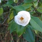 3/3/2012 Tyler Rose Gardens (7)