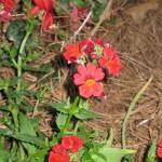 3/3/2012 Tyler Rose Gardens (9)