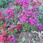 3/3/2012 Tyler Rose Gardens (10)