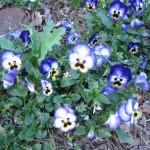 3/3/2012 Tyler Rose Gardens (11)
