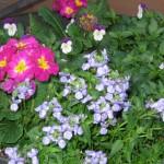 3/3/2012 Tyler Rose Gardens (16)