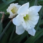 3/3/2012 Tyler Rose Gardens (17)