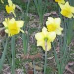 3/3/2012 Tyler Rose Gardens (24)