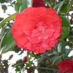 3/3/2012 Tyler Rose Gardens (26)
