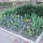 3/3/2012 Tyler Rose Gardens (29)