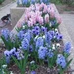 3/3/2012 Tyler Rose Gardens (30)