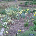 3/3/2012 Tyler Rose Gardens (33)