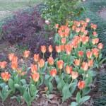 3/3/2012 Tyler Rose Gardens (35)