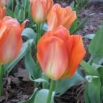 3/3/2012 Tyler Rose Gardens (36)