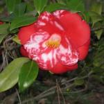 3/3/2012 Tyler Rose Gardens (38)