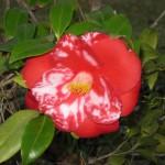 3/3/2012 Tyler Rose Gardens (39)