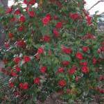 3/3/2012 Tyler Rose Gardens (40)