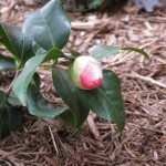 3/10/2012 March Buds and Plants (7)