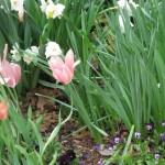 3/17/2012 March Arboretum (10)