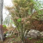 3/17/2012 March Arboretum (100)
